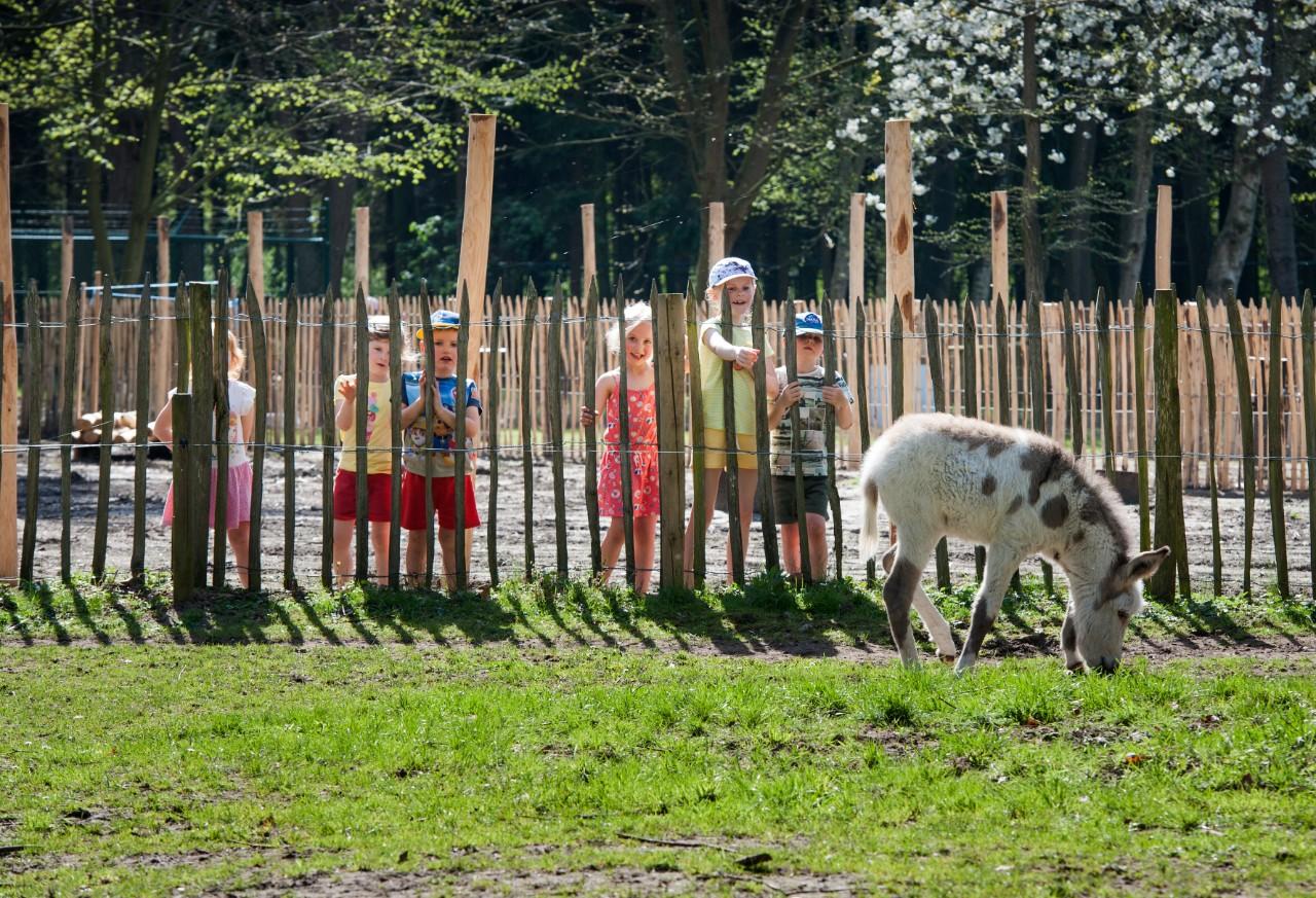 kinderen kijken naar  dieren in de kinderboerderij