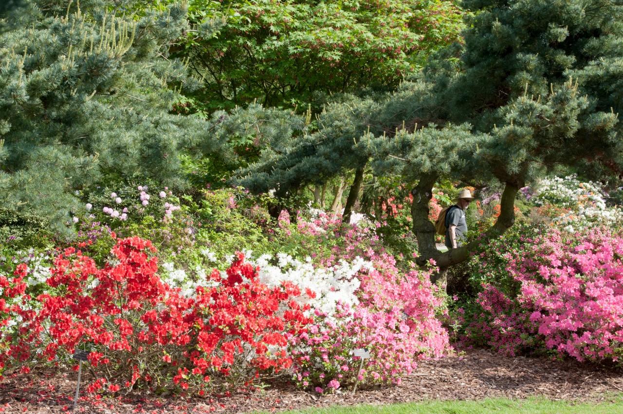 het arboretum in het leen