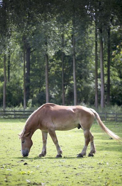 paard in dierenpark